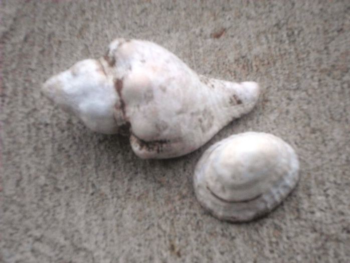 Two Old Shells